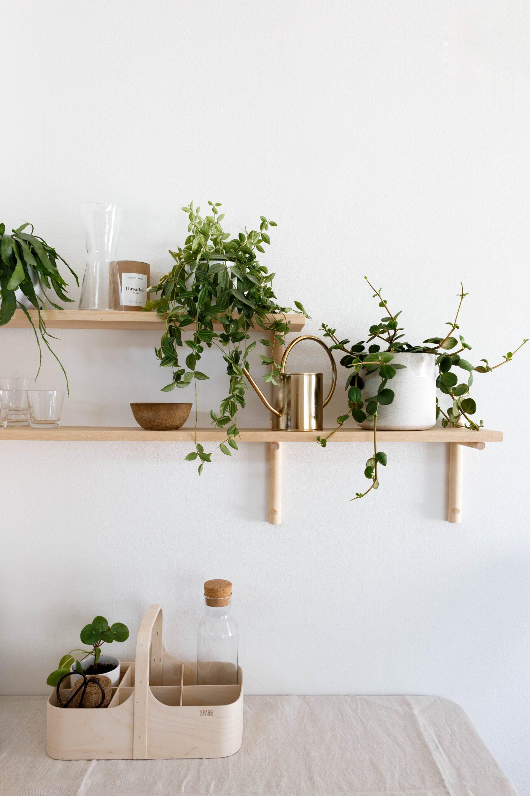 viherkasveilla sisustaminen